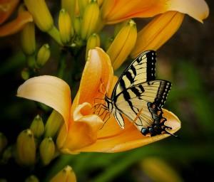 butterfly-144053_1280